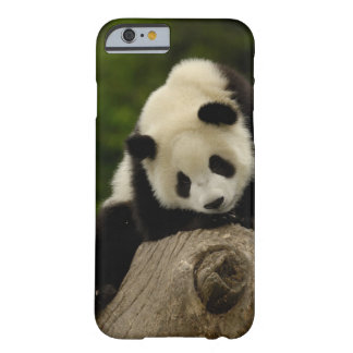 Giant panda baby (Ailuropoda melanoleuca) 2 Barely There iPhone 6 Case