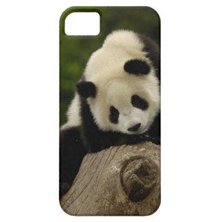 Giant panda baby (Ailuropoda melanoleuca) 2 iPhone 5 Covers