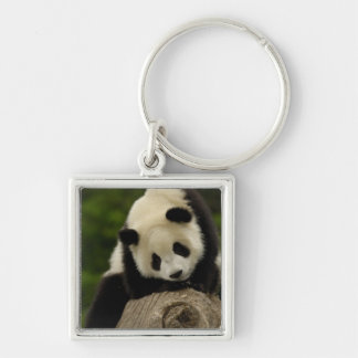 Giant panda baby (Ailuropoda melanoleuca) 2 Silver-Colored Square Key Ring