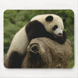 Giant panda baby Ailuropoda melanoleuca) 2 Mouse Mat