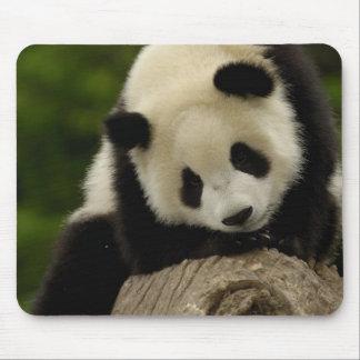 Giant panda baby (Ailuropoda melanoleuca) 2 Mouse Mat