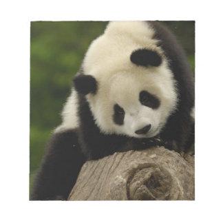 Giant panda baby (Ailuropoda melanoleuca) 2 Notepad