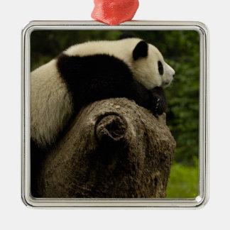 Giant panda baby (Ailuropoda melanoleuca) 3 Christmas Ornament