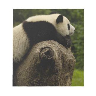 Giant panda baby (Ailuropoda melanoleuca) 3 Notepad