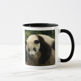 Giant panda baby (Ailuropoda melanoleuca) 4 Mug