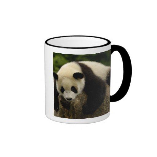 Giant panda baby (Ailuropoda melanoleuca) 4 Coffee Mugs