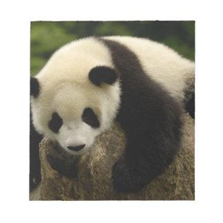 Giant panda baby (Ailuropoda melanoleuca) 4 Notepad