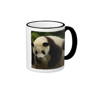 Giant panda baby (Ailuropoda melanoleuca) 4 Ringer Mug