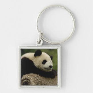 Giant panda baby Ailuropoda melanoleuca) 8 Keychains