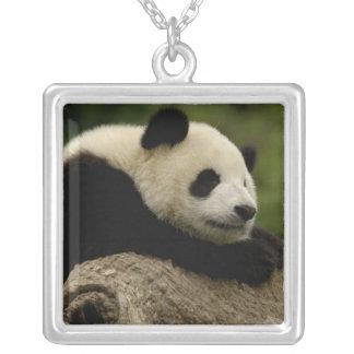 Giant panda baby Ailuropoda melanoleuca) 8 Silver Plated Necklace