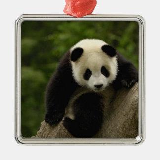 Giant panda baby Ailuropoda melanoleuca) 9 Christmas Ornament