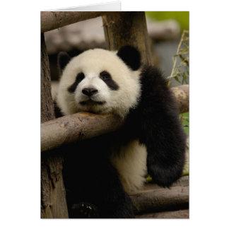 Giant panda baby Ailuropoda melanoleuca) Greeting Card