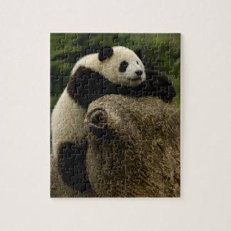 Giant panda baby (Ailuropoda melanoleuca) Jigsaw Puzzle