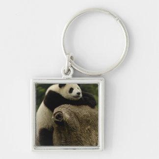 Giant panda baby (Ailuropoda melanoleuca) Keychain
