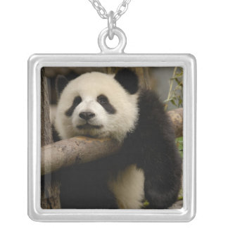 Giant panda baby Ailuropoda melanoleuca) Silver Plated Necklace