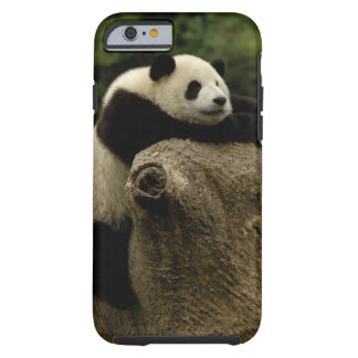 Giant panda baby (Ailuropoda melanoleuca) Tough iPhone 6 Case