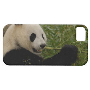baby panda eating bamboo electronics tech accessories zazzle co uk
