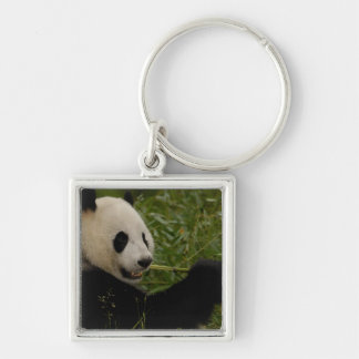 Giant panda baby eating bamboo (Ailuropoda Key Chain