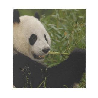 Giant panda baby eating bamboo (Ailuropoda Notepad