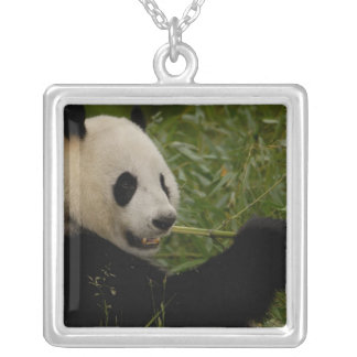 Giant panda baby eating bamboo (Ailuropoda Silver Plated Necklace
