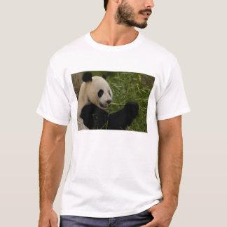Giant panda baby eating bamboo (Ailuropoda T-Shirt
