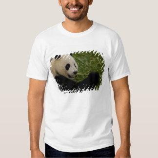 Giant panda baby eating bamboo (Ailuropoda Tshirt