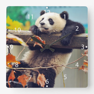 Giant panda baby over the tree clock
