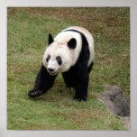 Giant Panda Bear & Baby Panda Poster