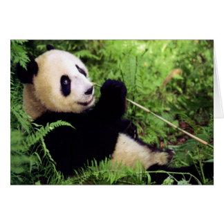Giant Panda Bear Card