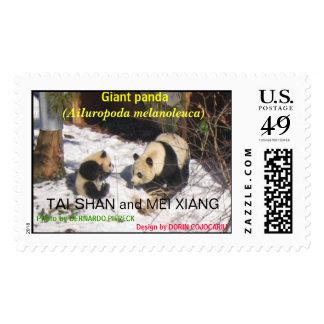 Giant panda bear cute cub Tai Shan, Mei Xiang, zoo Postage
