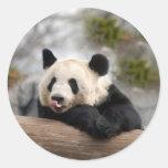 Giant Panda Bear Stickers