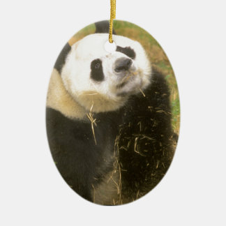 Giant Panda Ceramic Oval Decoration