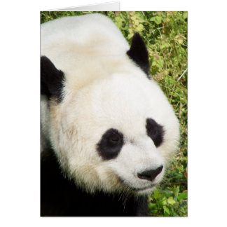 Giant Panda Close Up Portrait Greeting Card