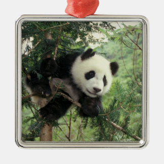 Giant Panda cub climbs a tree, Wolong Valley, Christmas Ornament