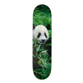 Giant Panda cub eats bamboo in the bush, 19.7 Cm Skateboard Deck