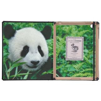 Giant Panda cub eats bamboo in the bush, iPad Folio Cover
