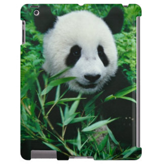 Giant Panda cub eats bamboo in the bush, iPad Case