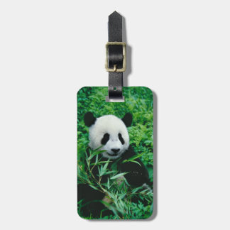 Giant Panda cub eats bamboo in the bush, Luggage Tag