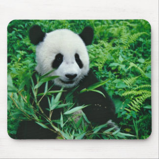 Giant Panda cub eats bamboo in the bush, Mouse Pad