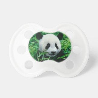 Giant Panda cub eats bamboo in the bush, Pacifier