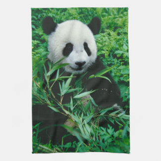 Giant Panda cub eats bamboo in the bush, Tea Towel