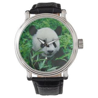 Giant Panda cub eats bamboo in the bush, Wristwatch