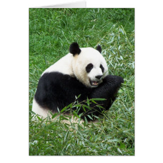 Giant Panda Eating Bamboo Greeting Card