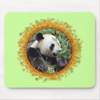 Giant panda eating bamboo in frame mouse pad