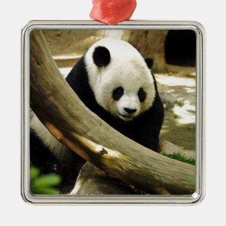Giant Panda Gao Gao at the San Diego Zoo Christmas Ornament
