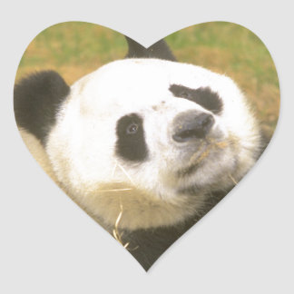 Giant Panda Heart Sticker