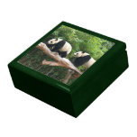 Giant panda in a wild animal zoo photography. large square gift box