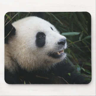 Giant Panda in Bamboo forest Mouse Mat