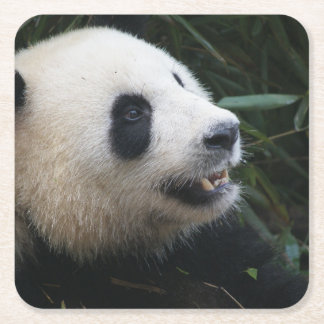 Giant Panda in Bamboo forest Square Paper Coaster
