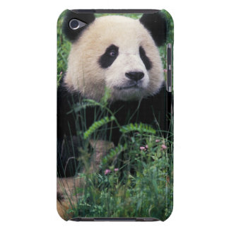 Giant panda in the grass, Wolong Valley, Sichuan Barely There iPod Covers